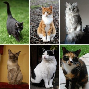 https://hi.wikipedia.org/wiki/%E0%A4%AC%E0%A4%BF%E0%A4%B2%E0%A5%8D%E0%A4%B2%E0%A5%80#/media/File:Collage_of_Six_Cats-02.jpg