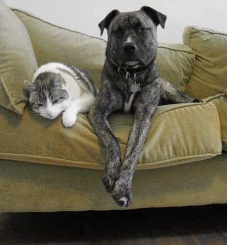 https://en.wikipedia.org/wiki/Pet#/media/File:Trillium_Poncho_cat_dog.jpg